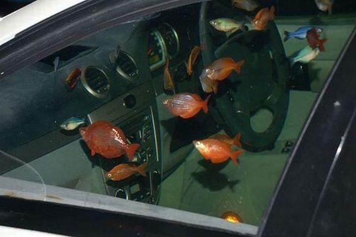 Aquarium im auto for Acquari particolari